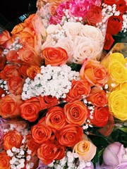 Colorful_Roses_With_White_Babys_Breath_Bouquets_Valentines_Day_Flowers